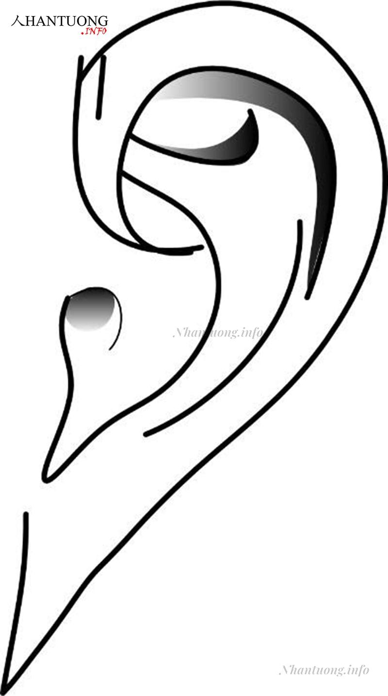 Dái tai nhọn và nhỏ