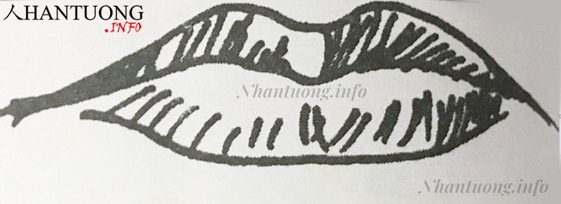 Hình dáng miệng cá chép