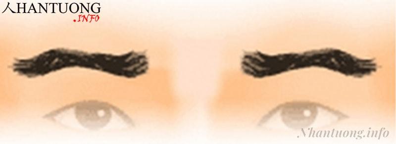 Hình dáng tướng lông mày dấu ngã (ngọa tằm mi)