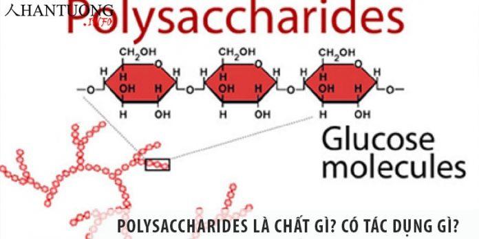 Polysaccharides là chất gì? Polysaccharides có tác dụng gì?