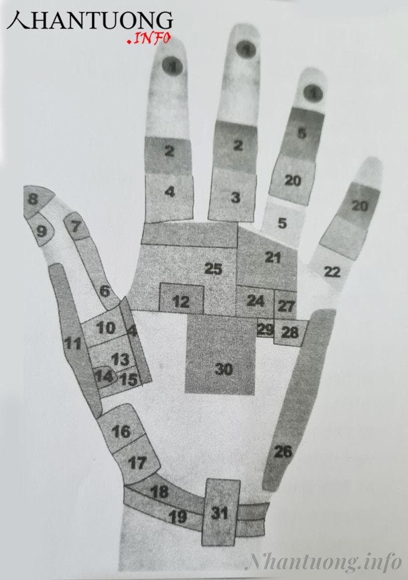 Cách chia bàn tay thành các phân khu để đoán định sức khỏe