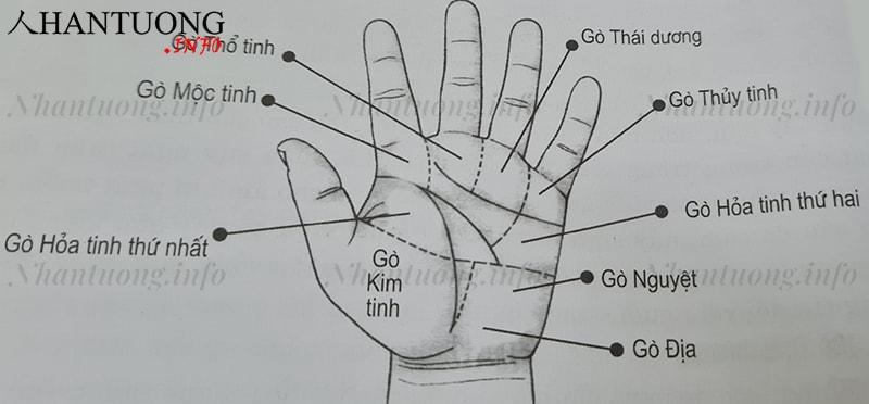 Các gò trên bàn tay